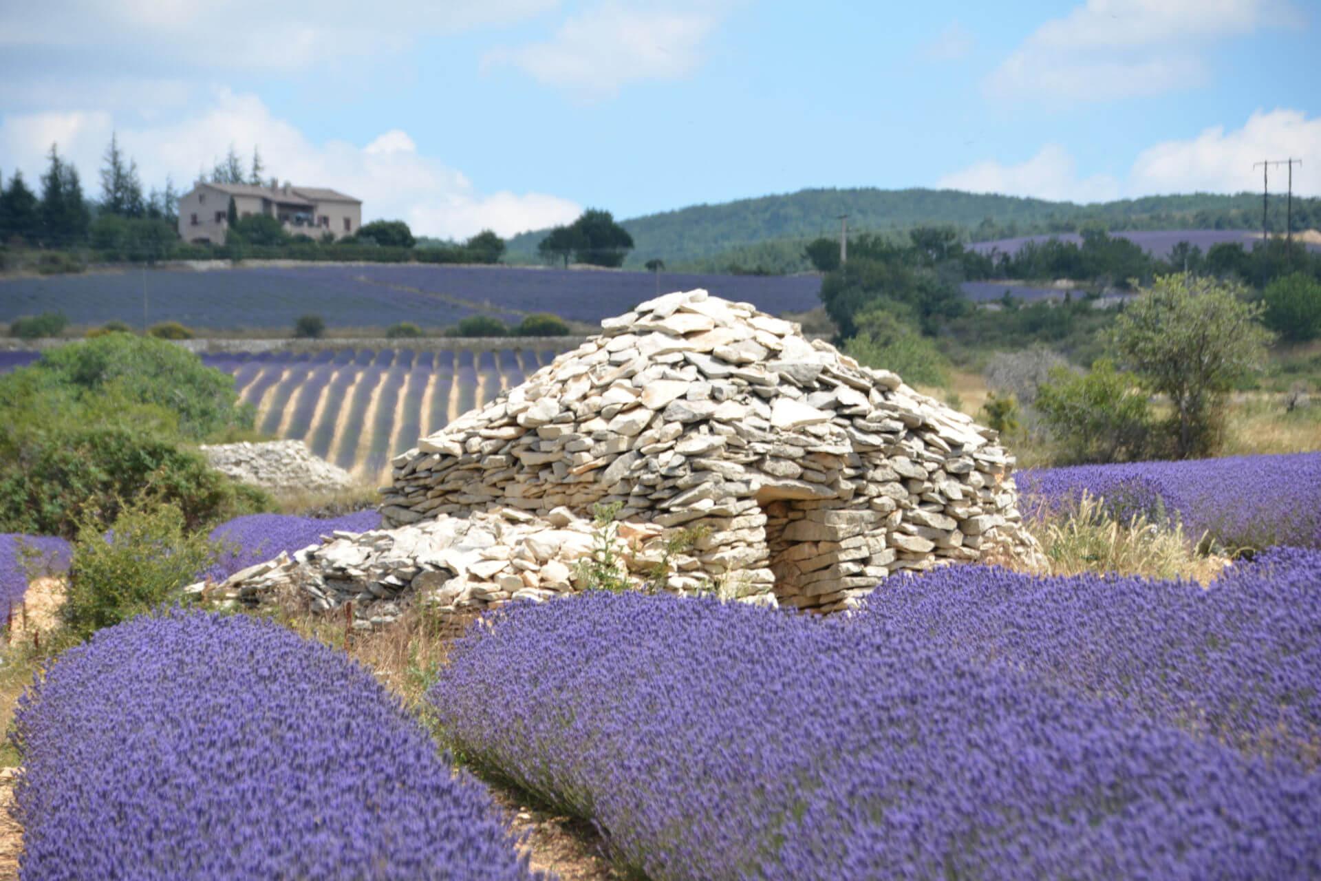hôtel champ de lavande Provence